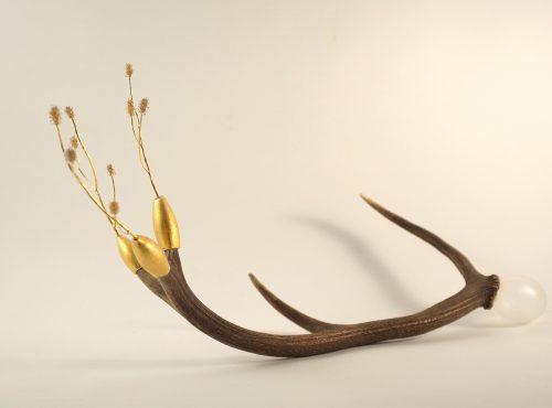 cerf-branche